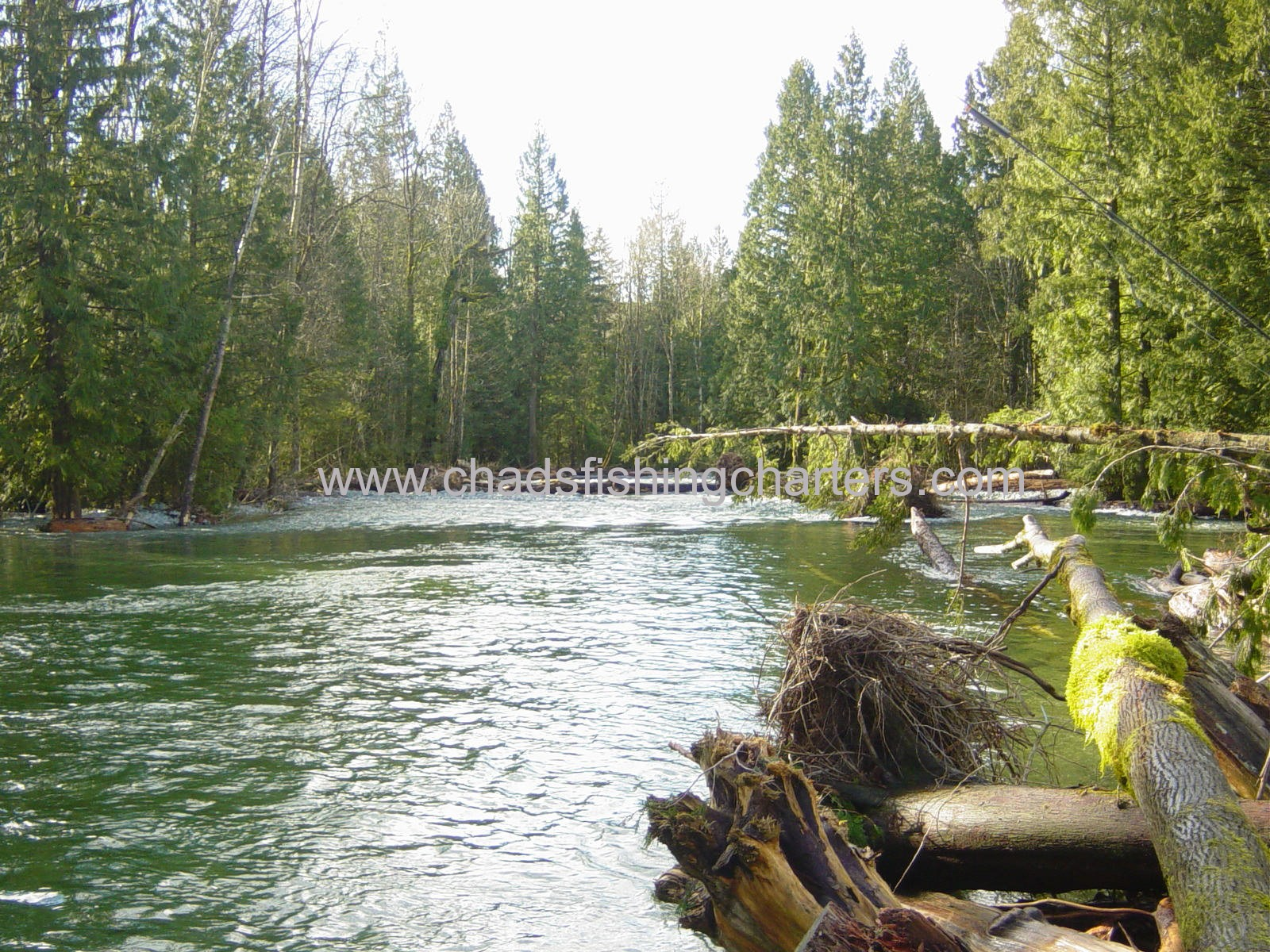 Fraser river fishing guides chilliwack river charters for Chehalis river fishing